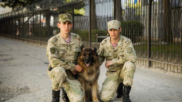 В Крыму росгвардейцы-кинологи во время тренировки с собаками задержали закладчика