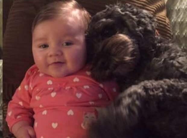 Во время пожара пес спас младенца, укрыв его своим телом и приняв огонь на себя