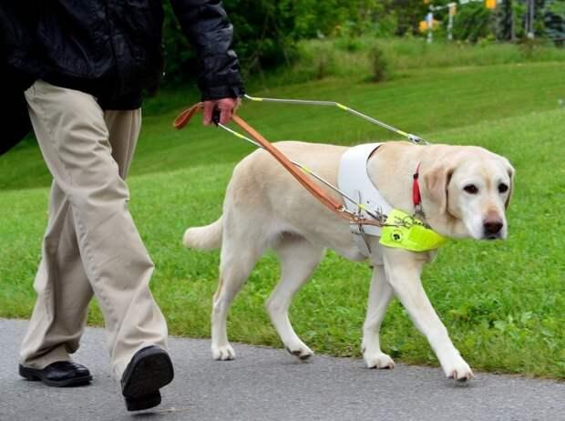 Животные, освоившие человеческие профессии