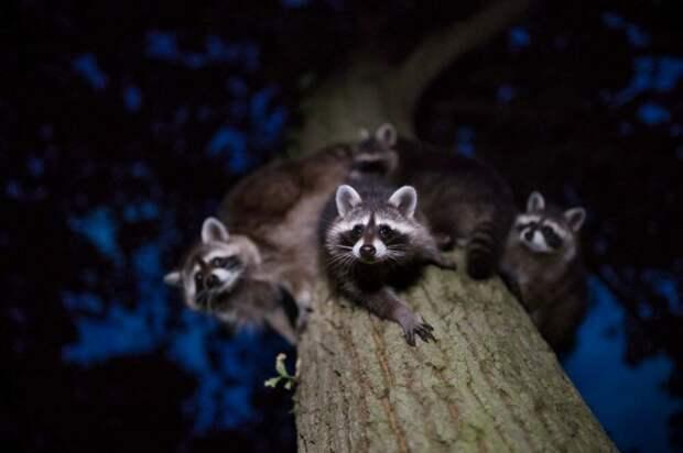Эти потрясающие фотографии дадут вам новое представление о природе