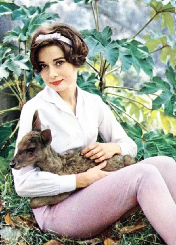 Одри Хепберн и ее олененок по имени Пиппин.