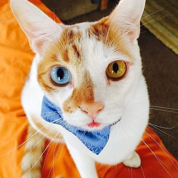 famousanimals08 Топ 10 самых популярных животных в Instagram
