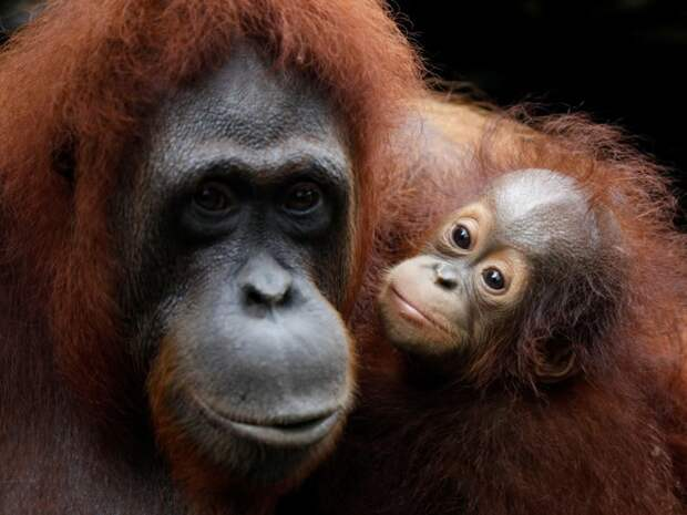 22 животных, которые находятся под угрозой исчезновения