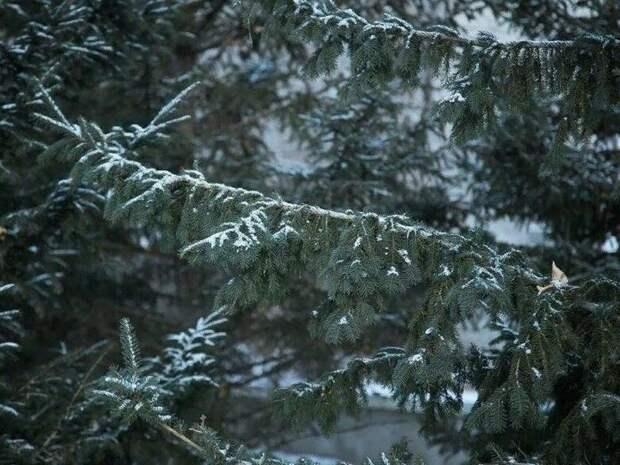 Дождь и мокрый снег ожидаются на территории Забайкальского края 9 мая