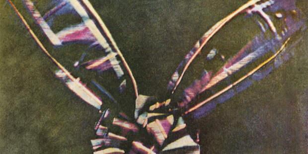 Тайна пёстрой ленты: 160 лет назад была сделана первая цветная фотография