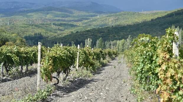 По следу лозы: на юге России набирает популярность винный туризм
