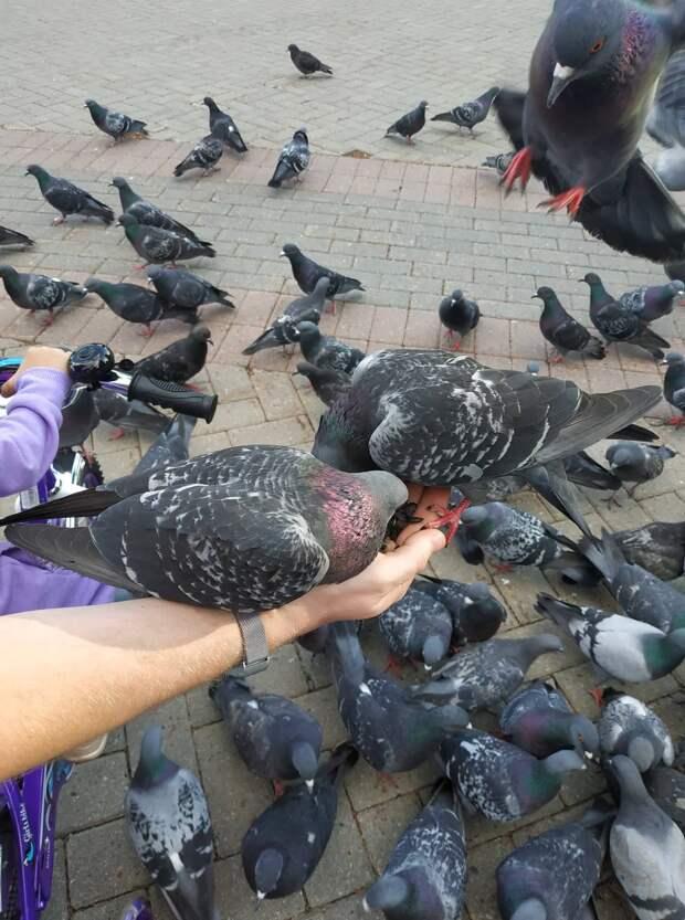 Жителей Магадана начнут штрафовать за кормление голубей