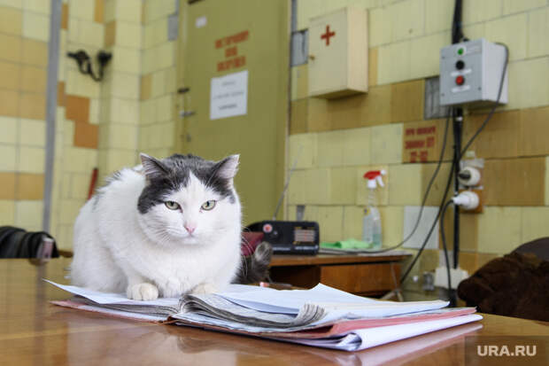 Ветеринары раскрыли, как клиники наживаются наздоровье животных