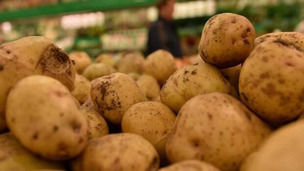 Российский ученый перечислил лучшие сорта картофеля для земель Подмосковья