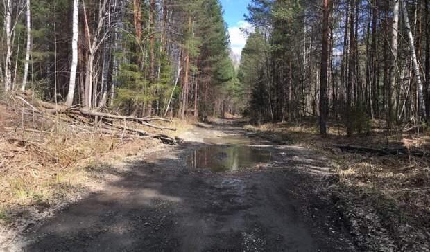 Болото и призрак: две дороги в поселок Волчевка под Нижним Тагилом