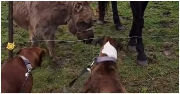 Осел заржал над любопытной собакой, которую ударило током