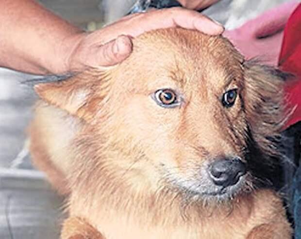 Собака спасла жизнь новорожденной девочке