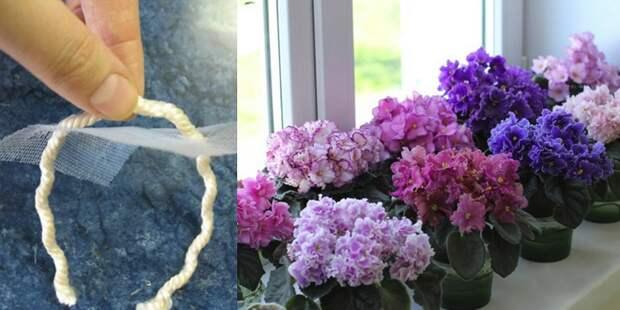 фитильный полив комнатных растений