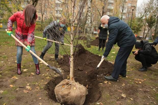 В Ростокине появились новые деревья