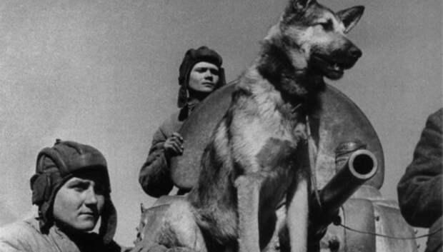 Онлайн‑выставка «Герой вернулся домой» откроется в Подольске в День Победы