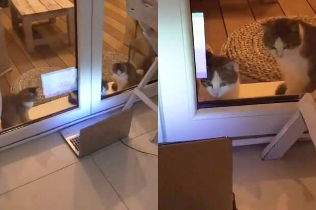 Кошки, увлеченные просмотром мультфильма про Свинку Пеппу, попали на видео