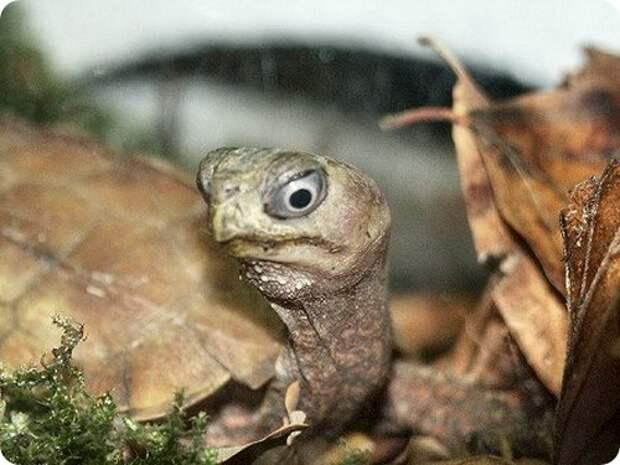 Домашний террариум: Рептилии и амфибии (Обучающее видео) скачать книгу бесплатно