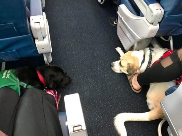 10 случаев, когда люди взяли животных в поездку, и те подняли настроение всем окружающим