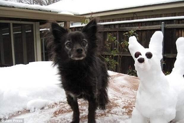 Хозяйка, а что это такое белое на улице? Домашние питомцы, которые впервые видят снег