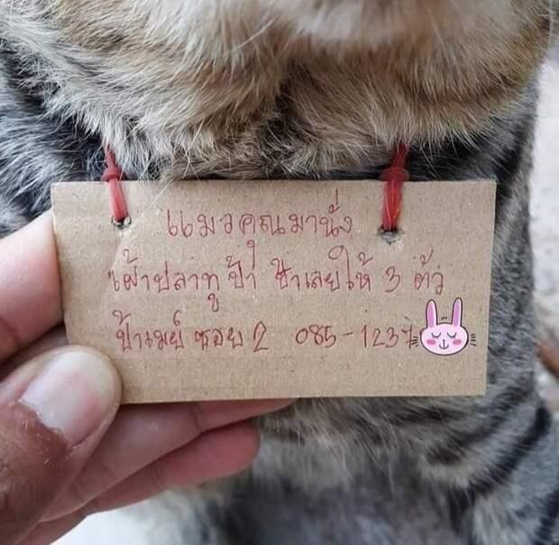 Сбежавший из дома на три дня кот, вернулся с запиской, которая насторожила всех