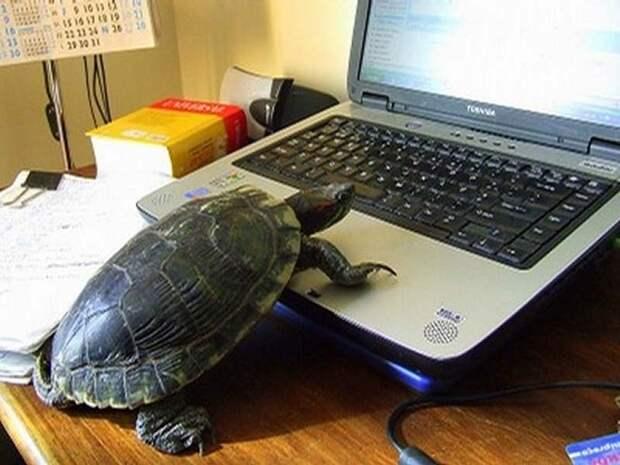Чем черепахи лучшекошек
