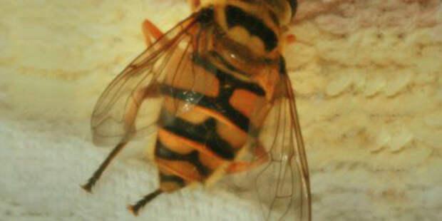 Обнаружены следы древних охотников за диким медом