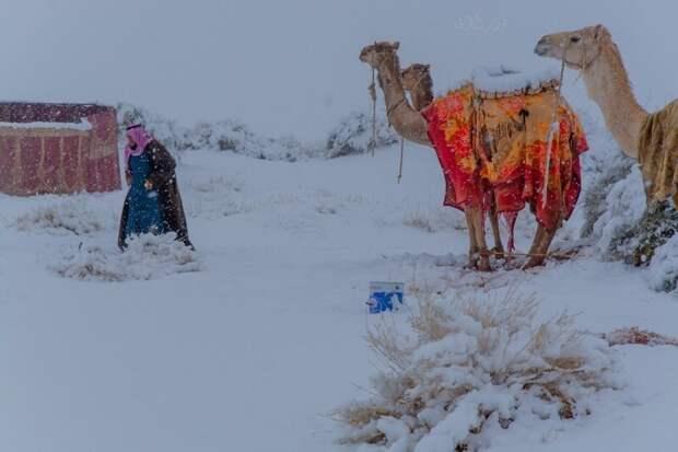 «И рубают финики лопари, а в Сахаре снега невпроворот: это гады физики на пари раскрутили шарик наоборот» (А. Галич)