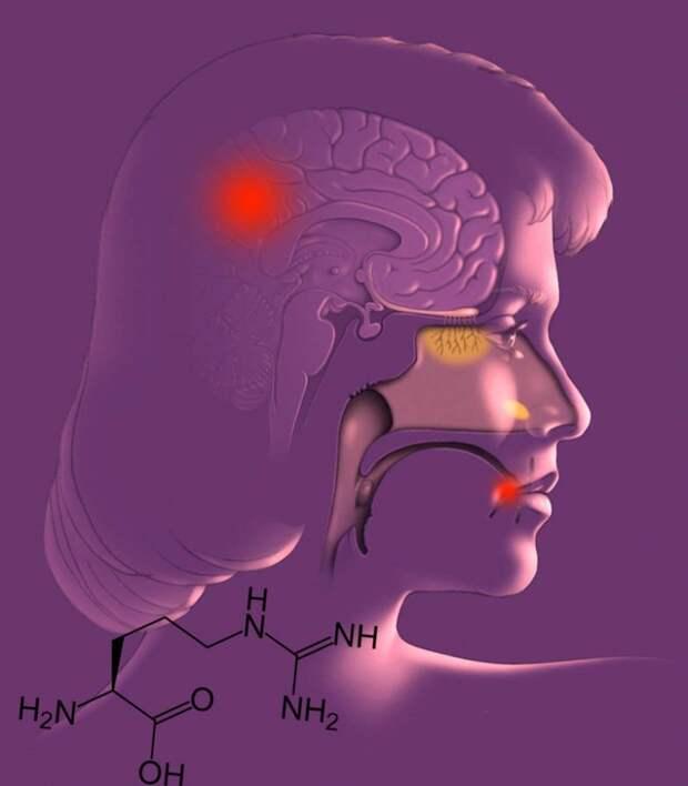 Что провоцирует герпес и болезнь Альцгеймера