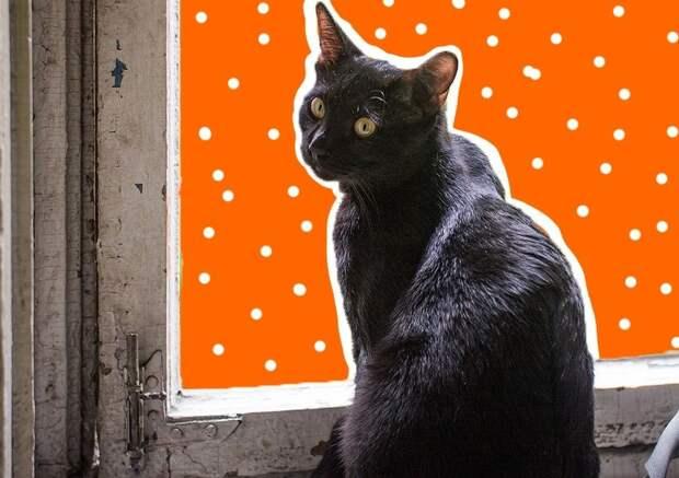Что делать, если кот метит территорию в квартире?