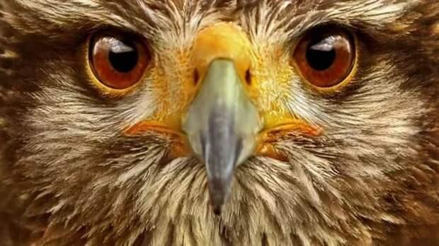 Мир глазами птиц: съемки камерой, прикрепленной на теле пернатых