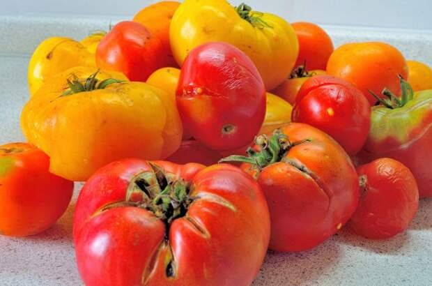 помидоры растрескавшиеся