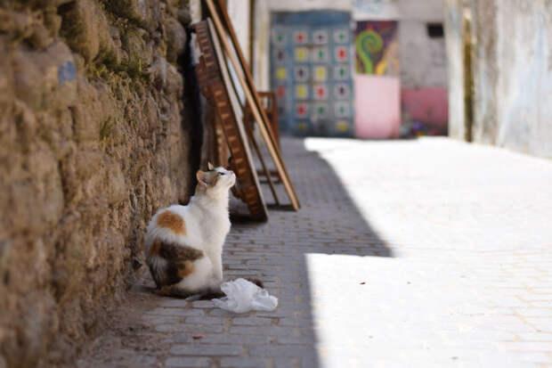 Засмотрелся на картины Эс-Сувейра, город, животные, кот, марокко, проект, фотограф