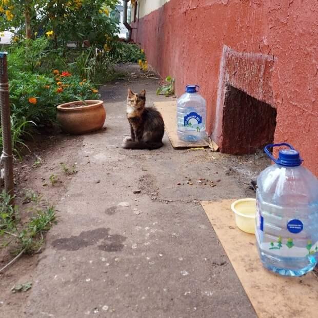 Хулиганы похитили дом для кошек на проспекте Маршала Жукова