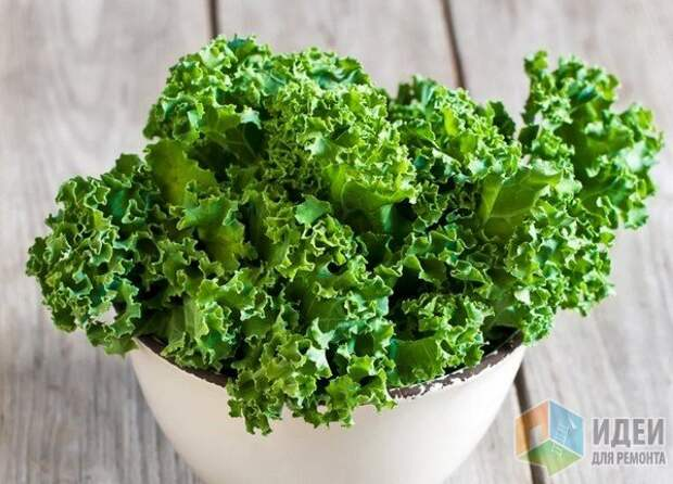 Первый урожай домашнего салата можно получить уже через 3 недели, причем с одного растения  съедобные листья срезают несколько раз.
