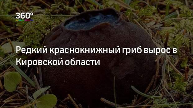 Редкий краснокнижный гриб вырос в Кировской области