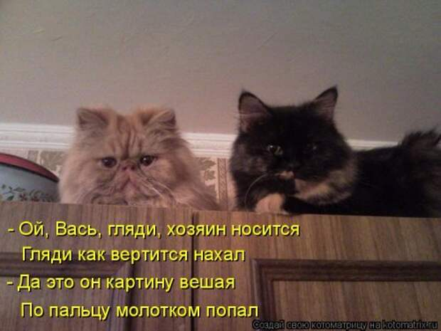 Лучшая котоматрица недели (41 фото)