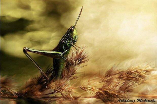 Потрясающие снимки природы Arkadiusz Makowski