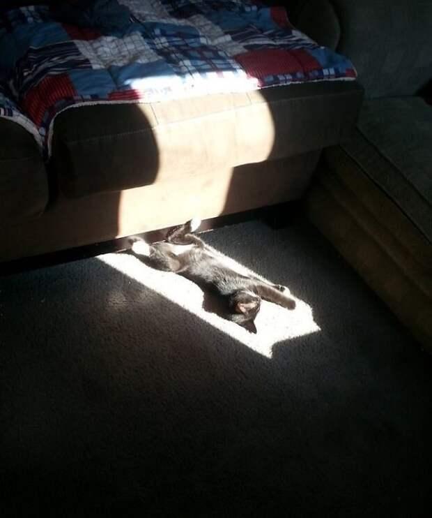 Усатый профессионал в поиске солнечных пятен животные, котики, лучи, погреться, солнечные ванны, солнце, температура, тепло
