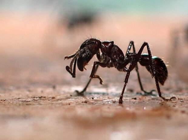 Самые опасные насекомые на планете