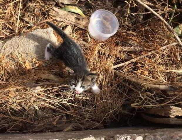 Спасти маленького мокрого котенка, который плакал у реки, не представлялось возможным: он очень боялся людей