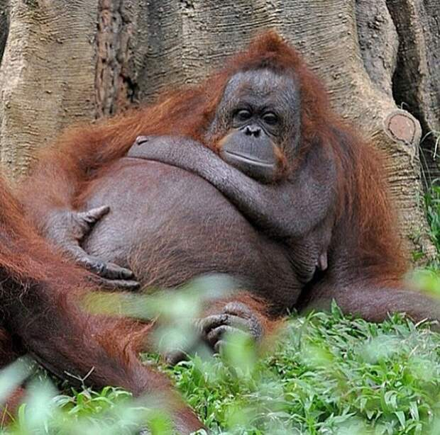 23 беременных животных, готовых познать прелесть материнства