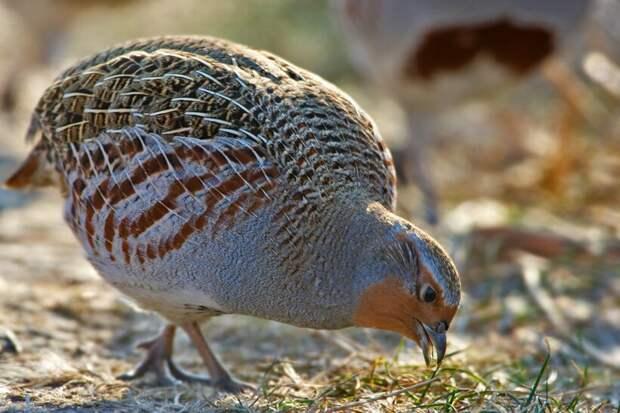 10 самых опасных существ Турции, от которых надо держаться подальше