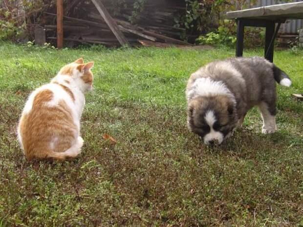 Как кот прикупил себе защитника
