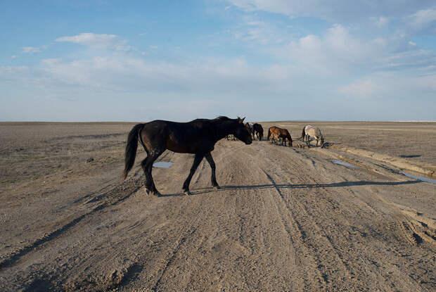 Аккергешен, чертовы пальцы, мертвые верблюды и мечети Бекет Ата. Путешествие на плато Устюрт, часть 3