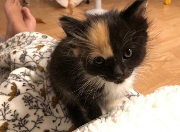 Котенок и ноги