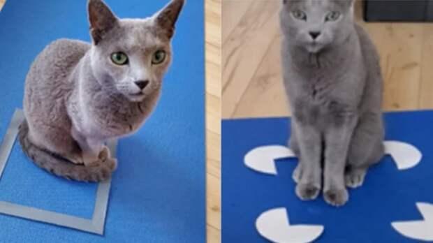 Ученые: кошки видят в квадратных фигурах свой дом