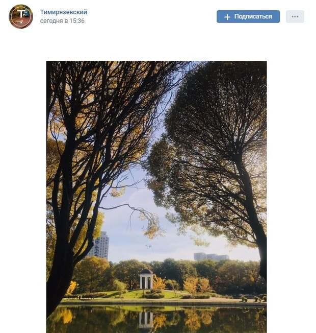 Фото дня: золотая осень в парке «Дубки»