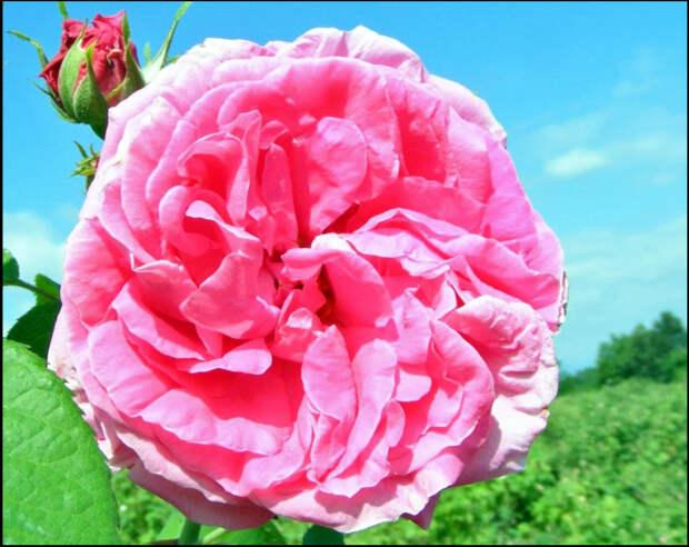 Шедевры мирового парфюмерного искусства... Первозданные ароматы, ч.1