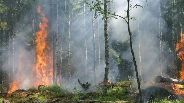 МЧС взяло ситуацию с лесными пожарами в Тюменской области на особый контроль
