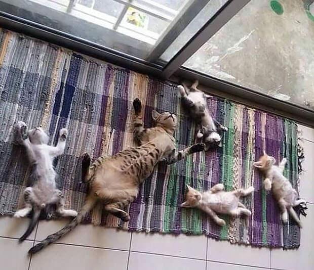 50 котиков, которые больше всего на свете любят погреться на солнце животные, котики, лучи, погреться, солнечные ванны, солнце, температура, тепло